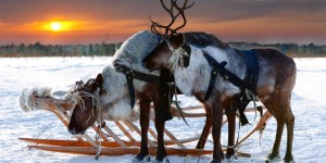 visit-inari-under-the-northern-lights-with-reindeer-870x435-2-1